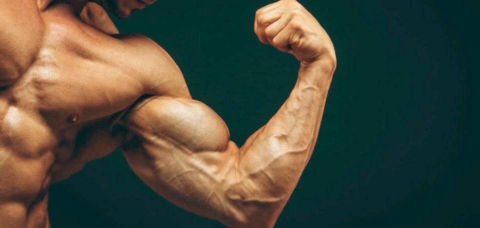 nutricion, entrenamiento y genetica los factores del desarrollo muscular