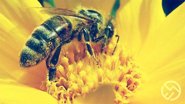 el cambio climático puede afectar a la producción natural de miel