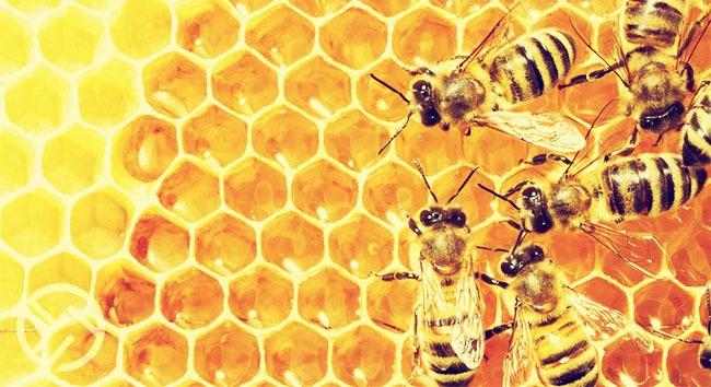 que pasa cuando se adultera la miel