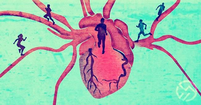 los efectos en el corazón y los pulmones