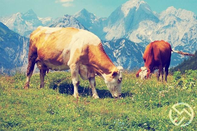 la produccion de leche y los aditivos