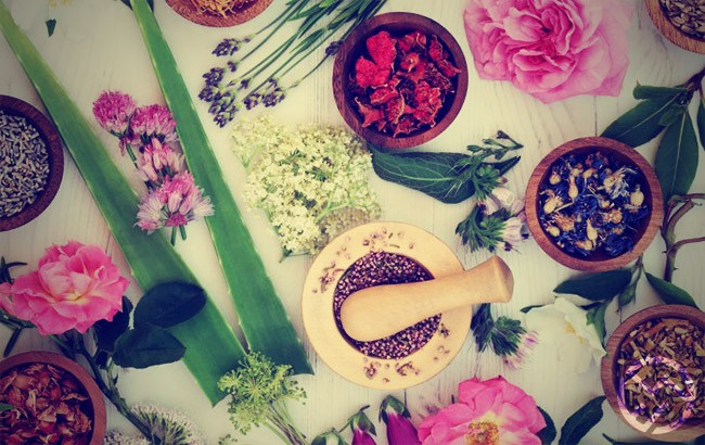 definicion de flores y terapias florales
