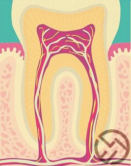 estructura completa dientes