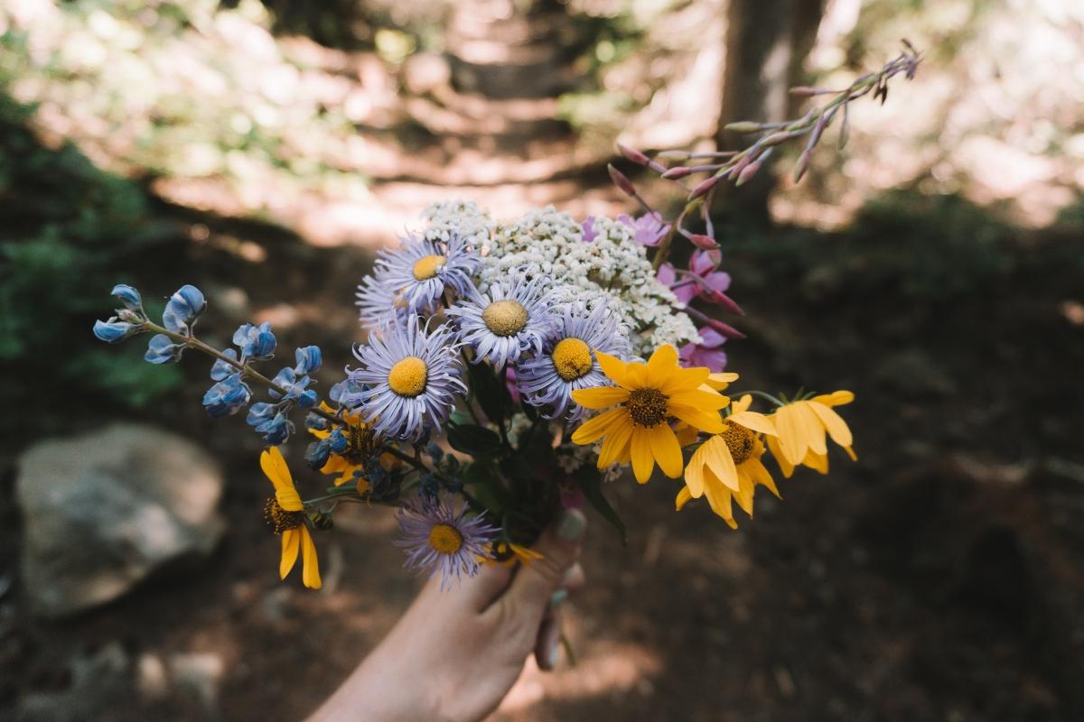 Flores de bach cómo usarlas