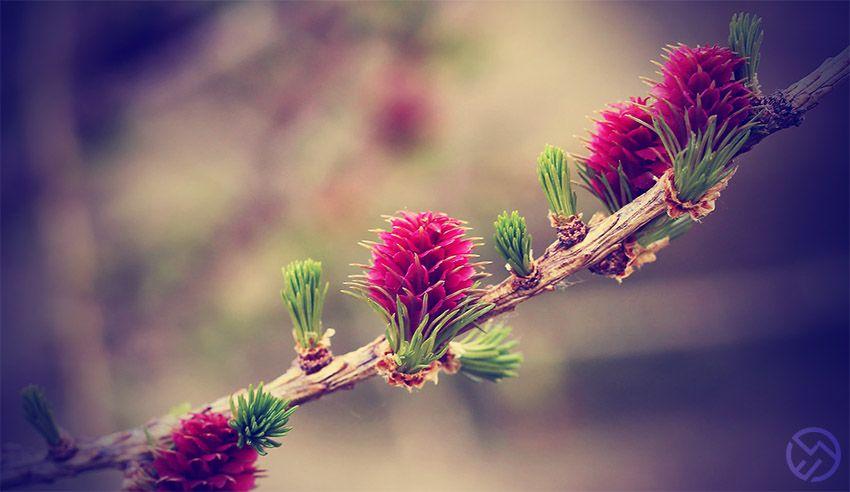¿Cuáles son las flores de Bach para adelgazar?