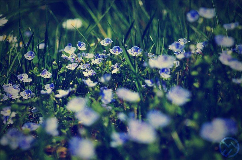 flores de bach ansiedad experiencias