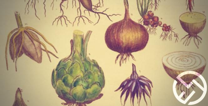 origenes medicina natural