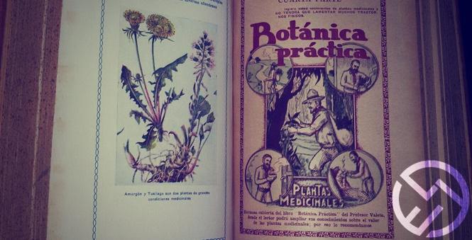 que plantas son medicinales