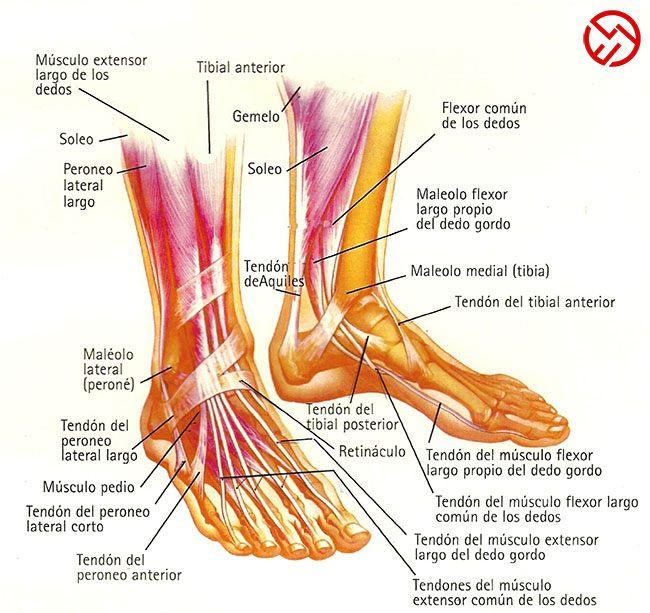 Manual de lesiones de tobillo y pie en el running: ¡¡Corre SIN dolor!!
