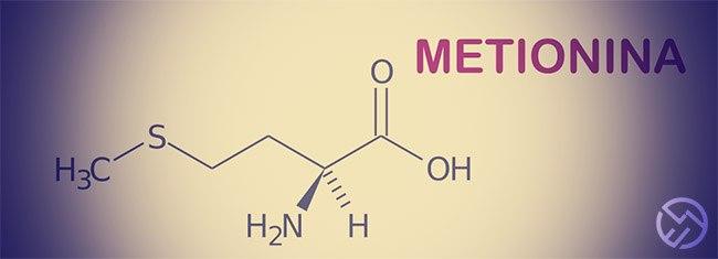 Conoce la Metionina, aminoácido antioxidante
