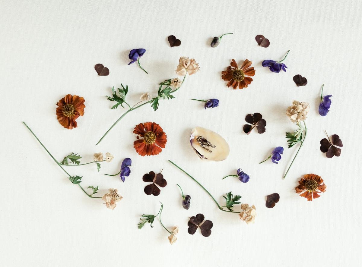plantas antiinflamatorios naturales