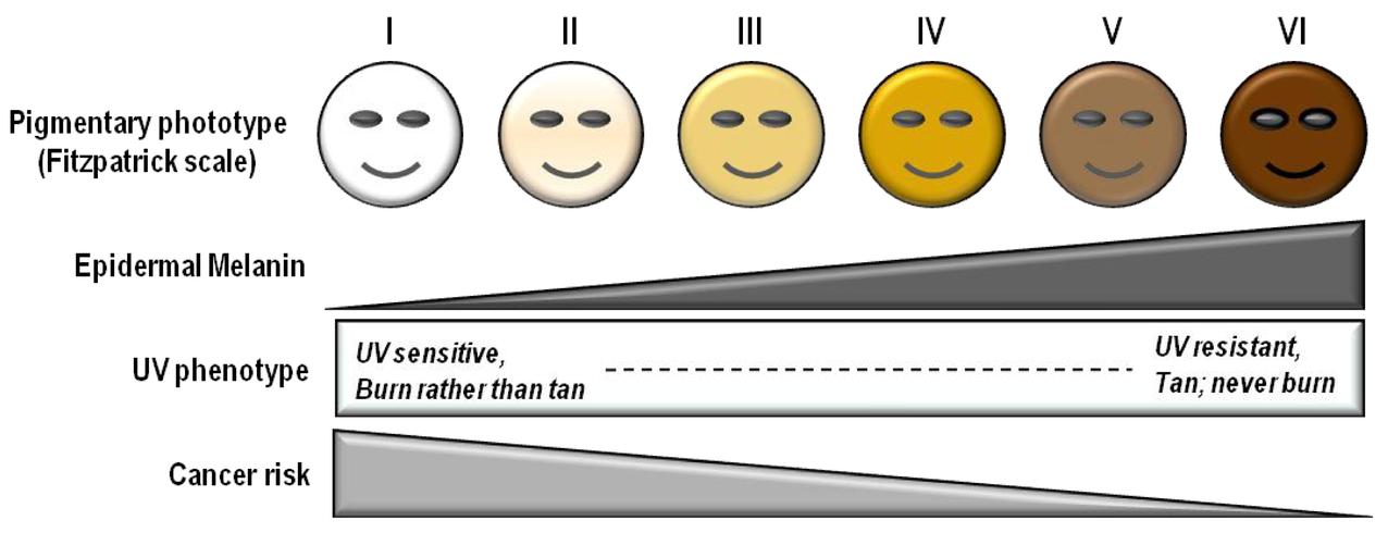 escala de fitzpatrick